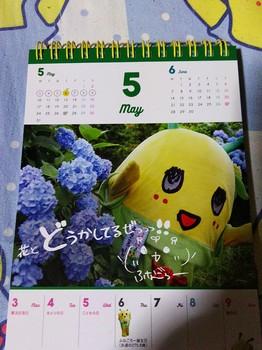 DSC_2319_copy_979x1305.jpg