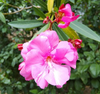 PhotoPictureResizer_190620_141416454_crop_3687x3456-1024x960-1024x960.jpg